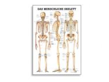 All-In Sport: Lehrtafeln der menschlichen Anatomie gelten als weltweit die schönsten und gelungensten anatomischen Tafeln. Die Zusammenarbeit von anerk...