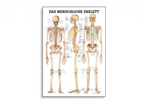 Het menselijke skelet anatomische poster