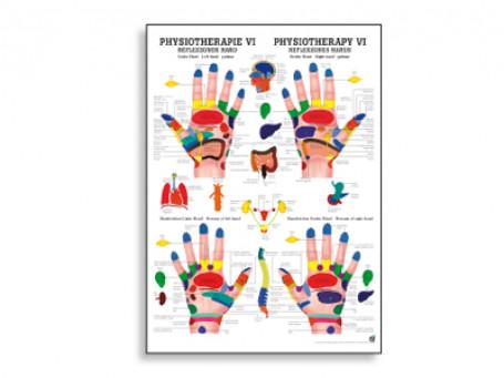 Reflexzones Hand fysiotherapie-poster