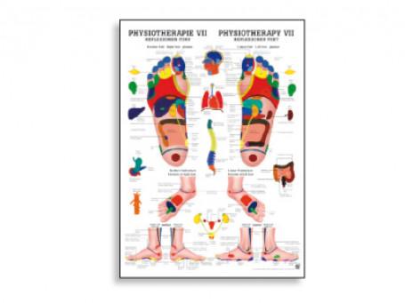 Reflexzones Voet fysiotherapie-poster