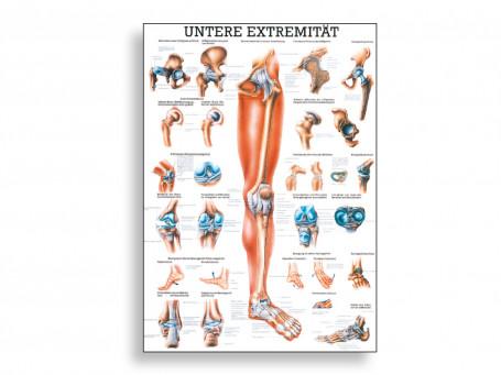 Onderste extremiteiten 70x100 cm